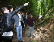 zwalczanie szkodników drewna